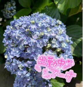 紫陽花の季節ですね(*´▿`*)